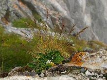 Горные цветы. / Словакия, Высокие Татры))
