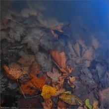 ...deep autumn / Этой карточкой я заканчиваю свой осенний депрессиff... ЗЫ спасибо заглянувшим)
