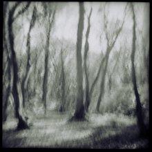 осень / ...как долго  нужно смотреть на деревья, чтобы  они проросли  и  в  нас... Антуан де Сент-Экзюпери.