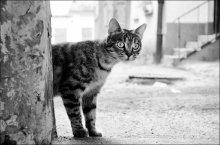 полукотафота / а как же без котиков