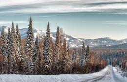 Зимний лес / Предгорья Алтая