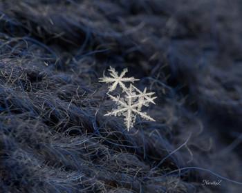 Снежное ассорти / Мороз, солнце и первые пушистые снежинки