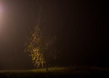 Дерево в тумане / ***