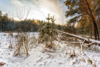 PF-2019 / У лесной опушки и замерзших болот. Февраль 2018.