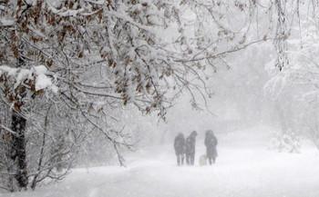 На прогулку в любую погоду! / Снегопад-парк