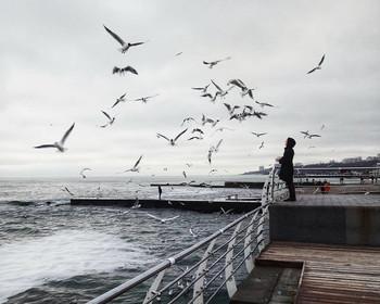 Родственные души / Над прибоем кружат чайки...