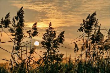 Утомлённое солнце / Успел застать этот момент на берегу гребного канала во время прогулки на закате.
