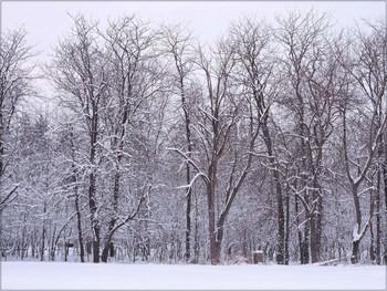 Вот такой он январь / Зима...