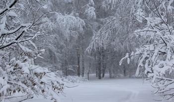Все в снегу! / Снег укутал все вокруг