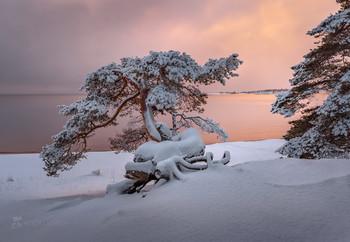 Декабрьская Ладога / Перед Новым годом я провёл 5-ти дневный фототур по Ладожскому озеру.  Фототур прошёл удачно. Нам повезло со снегопадами, которые украшали лес пушистым сказочным одеянием. И, что бывает редко, несколько дней стоял штиль, поэтому даже на самом берегу озера и на островах, обычно открытых сильным ветрам, живописные сосны стояли в снегу. Это создавало новогоднее настроение и возможность снимать удачные работы. Плюс, мы выезжали вглубь Карелии на лесную реку с бурными высокими порогами и величественными елями по берегам. Для разнообразия фотоматериала, по пути, находили посёлки и хутора со старыми деревянными домами. Эти домики, запорошенные белоснежным снегом, окружённые соснами неожиданно картинно получились, будто иллюстрации из северных сказок.  Конец декабря, 2018 год. Приглашаю на фототур «Зимняя Ладога» с проживанием в коттедже. Подробности здесь https://vk.com/topic-69994899_34929759 (контакт) и https://www.facebook.com/groups/1755505914709044/ (фейсбук).