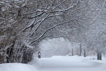 Зимние картинки / Аллея в Строгинском парке!