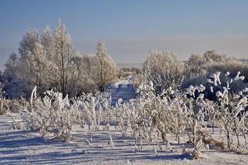 Зима в деревне. / Зима в деревне за огородами.