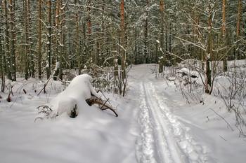 Зимний лес / Лыжня в лесу