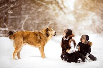 Зимняя прогулка / Братики с собакой