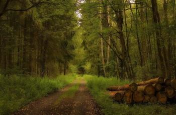 Без солнца .. / Осенний лесной пейзаж . Зарисовка .