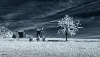 Черным по белому / ИК-фото