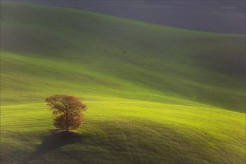 Одинокое дерево / Пейзажи Тосканы