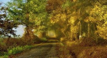 Туман и Солнце . / Тот момент когда расходится туман и светит солнце .. Осенний пейзаж . Зарисовка .