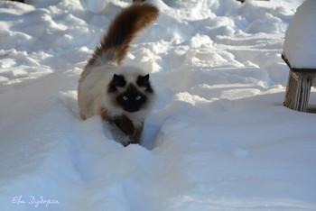 #многоснегабывает / Бусидо нравится зима. Но, сдается мне, что он иногда думает, что снега могло быть и поменьше :)