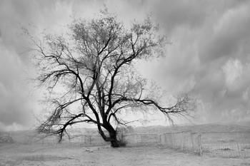 Дерево / Дерево... просто дерево в степи у родника с живительной водой. В урочище Акмыш имеются развалины древнего города Кызыл-Кала, которое находится, примерно в 300 метрах от урочища. Акмыш – ручей с небольшой рощицей по берегам.