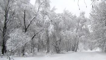 Все в снегу! / Прогулка в парке