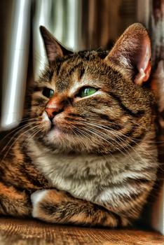Задумалась / Это Маруся. Поела, поместила свою тушку на подоконник и о чем-то думает, глядя в окно.