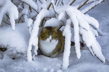 Нападение снежных пауков / Своя, домашняя