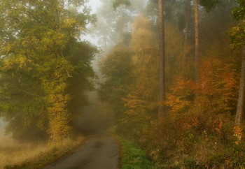 Ноябрь ЖЖёт.. / Осенний пейзаж . Зарисовки ноября .