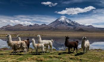 Открытка из Чили / Одно из самых высокогорных озер в мире - Чунгара (4500 м), вулкан Невадо Сахама (6450 м) и приятные на вкус ламы - все в одном флаконе.