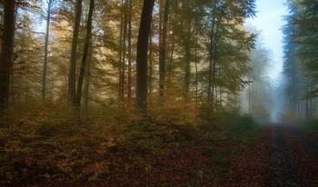 Синий туман / Осенний лес . Пейзаж Зарисовка .