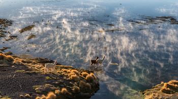 """Утро / Горячие ключи впадают здесь в соленое высокогорное озеро. Под водой скрыты пастбища сочной зеленой травы, куда стремятся все обитатели этих пустынных мест.На заднем плане - андские гуси. Национальный заповедник фауны Андов """"Эдуардо Авароа"""", Альтиплано, Боливия"""