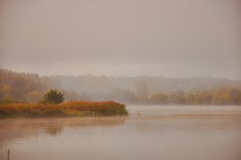 Цапли на озере. / Цапли на туманном озере.