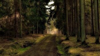 В начале марта .. / Весенний лесной пейзаж . Зарисовка .