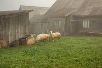Пастораль / Завтрак в тумане (из прогулок по Закарпатью)