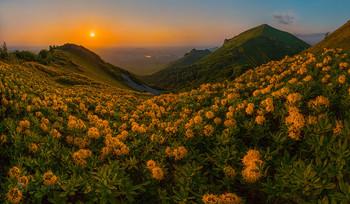 Золотые цветы - рододендроны / Весенний рассвет. И чудо природы – целое море крупных золотых цветов… – Азалия! После ночного ливня, трава, цветы покрыты обильной росой. Оранжевое солнце медленно встаёт. Тихо на горе.  Цветёт родендрон жёлтый, на склоне вершины Малый Тау. Справа вершина горы Бештау. Рододендрон желтый (Rhododendron luteum Sweet), или понтийская азалия (Azalea роntica) - кустарник, вид рода Рододендрон (Rhododendron) семейства Вересковые (Ericaceae). Занесён в Красную Книгу.  Гора Бештау. Фотопроект «Открывая Ставрополье». Конец мая, 2018 г. Приглашаю увидеть цветущие рододендроны, в мае, в фототуре «Удивительное Ставрополье». Описание тура здесь: https://vk.com/topic-69994899_39416499 (контакт) и https://web.facebook.com/notes/фотохудожник-фёдор-лашков/фототур-удивительное-ставрополье-весна-лето/2179523828973915/ (фейсбук)