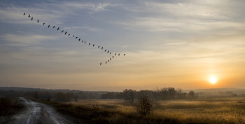 В окружении / утро,туман,солнце,охота