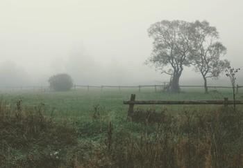 На фоне предрассветного тумана / Из прогулок по Закарпатью