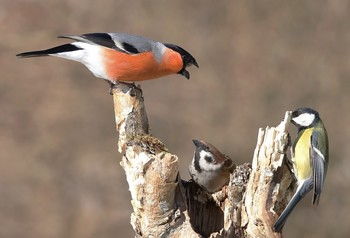выговор / птицы