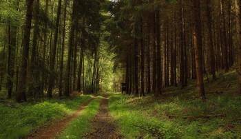По весне ..... / Лесными тропами. Весенний пейзаж .