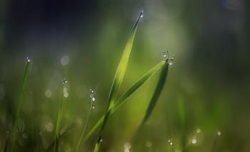..пробуждение.. / рассвет,весна,роса..