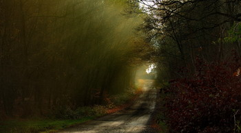 Последние лучи осени / Осенний пейзаж .