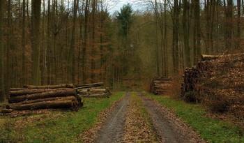 Рыжий декабрь.. / Лесной пейзаж в декабре.