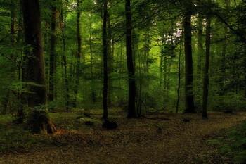 Вечер опустился.. / Вечерний лесной пейзаж.