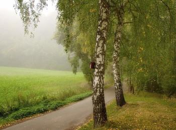 Берёзы в октябре / Осенний пейзаж .