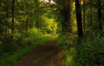 Вечерняя рапсодия . / Вечерний лесной пейзаж .Зарисовка .