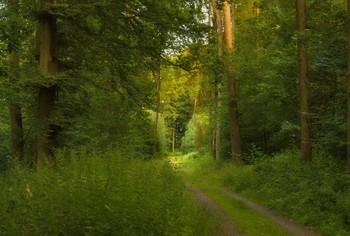 Тропинка к свету .. / Вечерний лесной пейзаж .