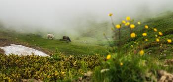 Рассветная песня ангелов / Сочи, Горки город, туманное утро в горах Красной поляны  http://www.youtube.com/watch?v=L0_qtAfRh44