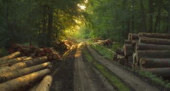 Утро настаёт.. / Утренний лесной пейзаж. Зарисовка