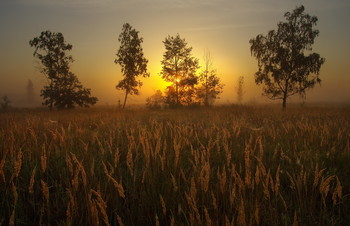 Без названия / летний рассвет, полесье, Беларусь, пойменный луг