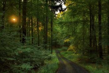 Солнечные зайчики / Утренний лесной пейзаж. Зарисовка